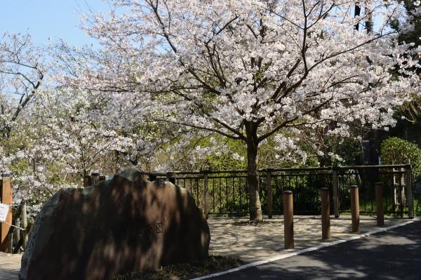 鎌倉山11