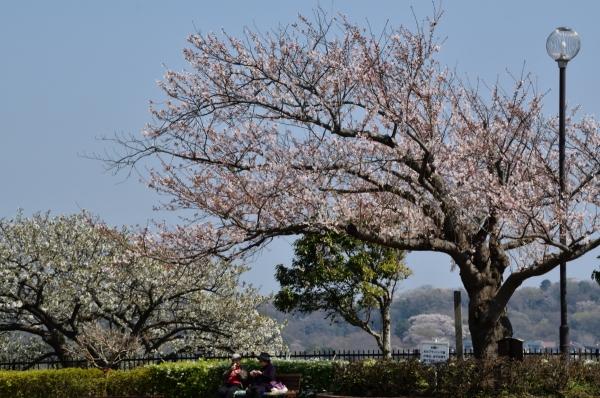 笛田公園4