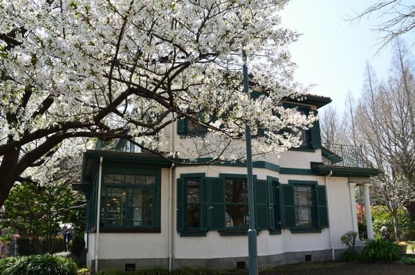 山手 桜2