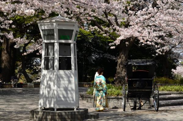 山手 桜11