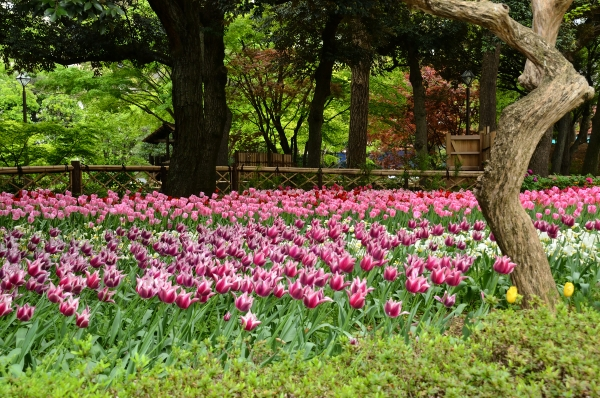 横浜公園2