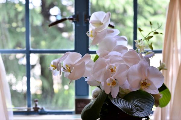 ベーリック花と器41