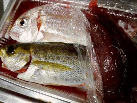 6.26 パイセンfish