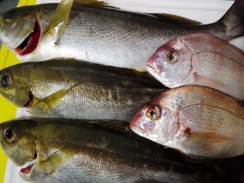 6.19 パイセンfish