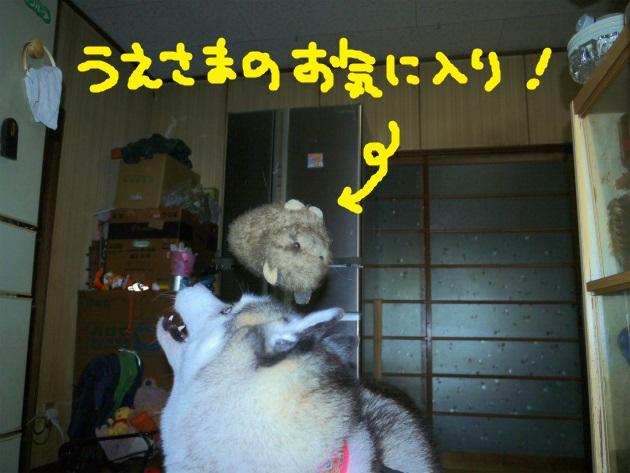 P2270814(1).jpg