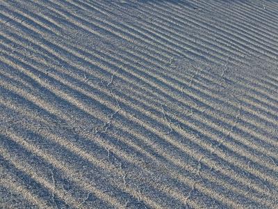 新潟砂丘・風紋
