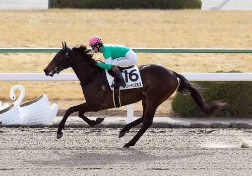 【皐月賞】に登録してるスリーヘリオスって馬