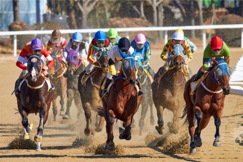 【競馬ネタ】3大日常でも使える競馬用語は?→放牧、道悪、あと1つは?
