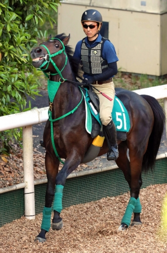【競馬新馬】シーザリオ×ロードカナロア 新星サートゥルナーリアが10日の阪神でデビュー