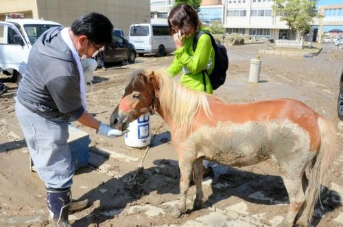 【競馬板】西日本豪雨 介護老人施設のアイドル馬、屋根の上で3日耐える
