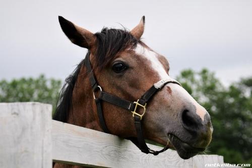 【競馬】岡田総帥「アルママは種牡馬として成功すると確信している」