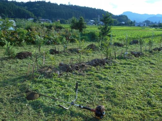 180722 草刈り②