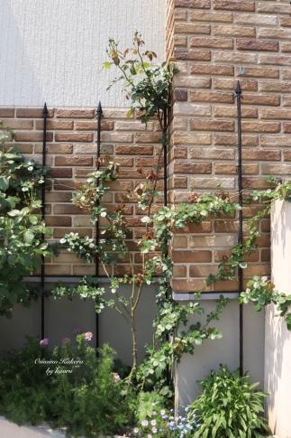 My Garden 2