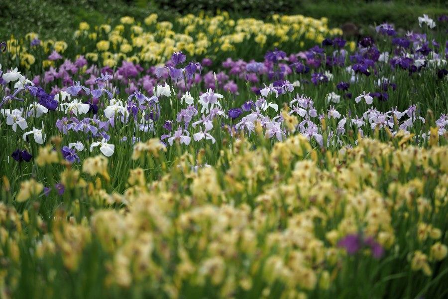 加茂荘花鳥園