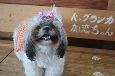 愛桜ちゃん