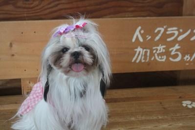 璃桜ちゃん
