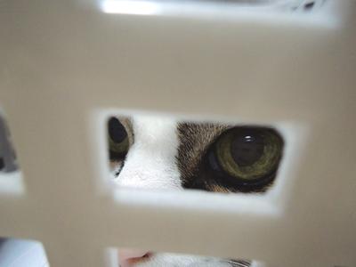 疑いの眼銀
