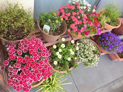 花コーナー