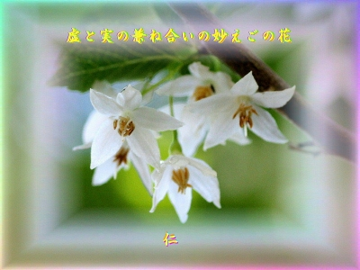 『 虚と実の兼ね合いの妙えごの花 』物真似575夏zrt2601