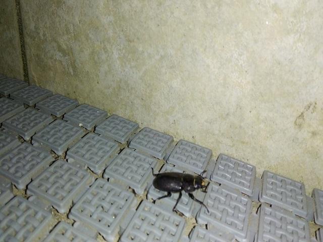 ゴキブリ?0714