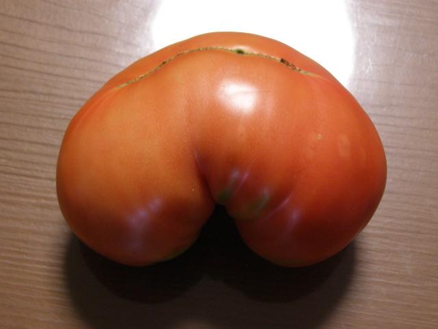 トマト0805