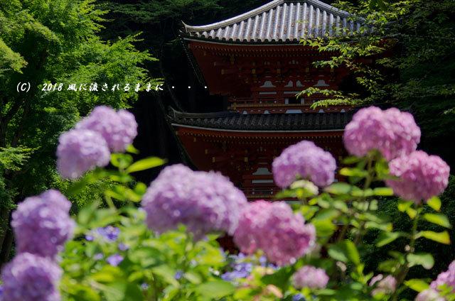 京都・ 岩船寺 三重塔の塔とアジサイ10