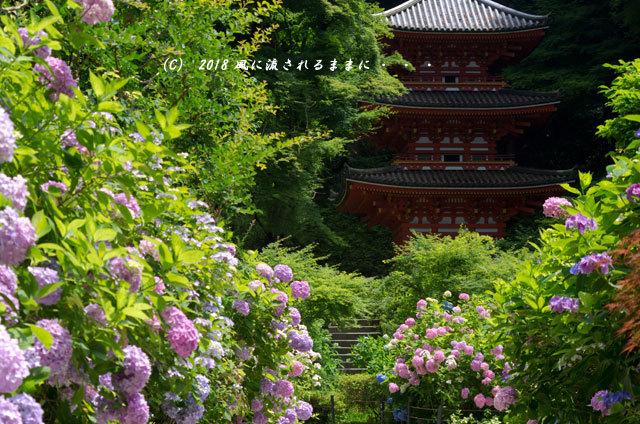 京都・ 岩船寺 三重塔の塔とアジサイ2
