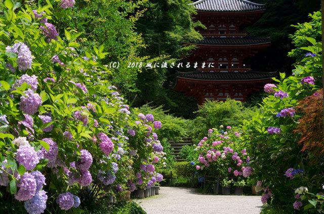京都・ 岩船寺 三重塔の塔とアジサイ3