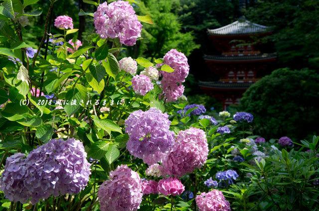 京都・ 岩船寺 三重塔の塔とアジサイ8
