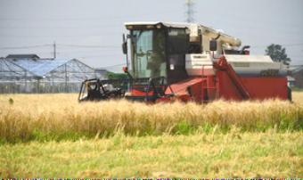 4891-340二条大麦