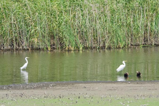 DSC05108野鳥公園