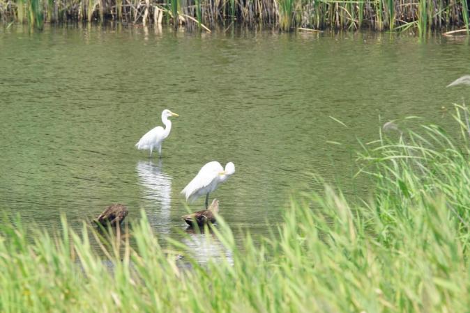 DSC05110野鳥公園