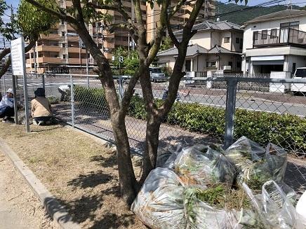 6172018 公園草取S3