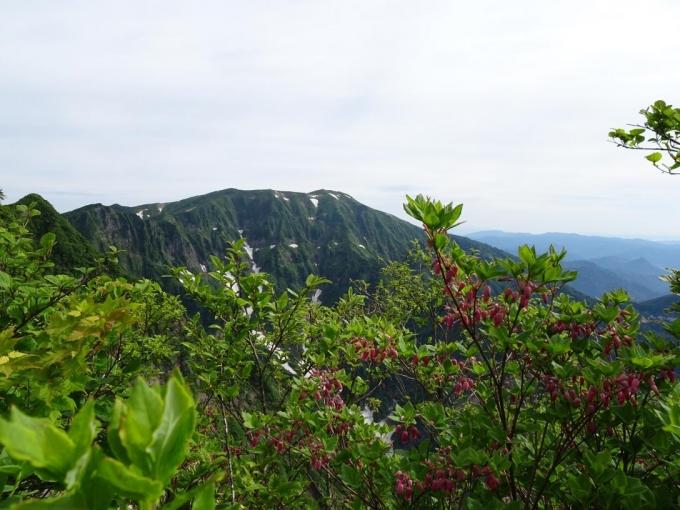 ウラジロヨウラクと浅草岳