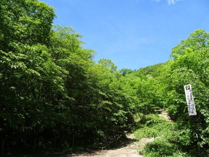 登山口、緑濃い