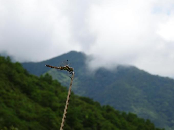 トンボと駒ヶ岳
