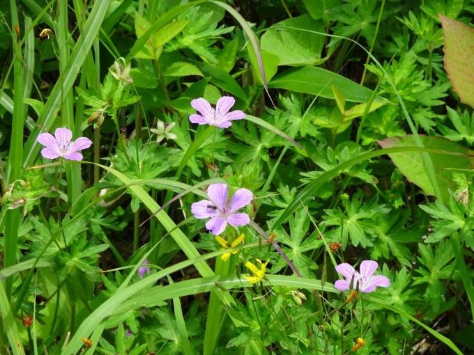 囲いの中のお花畑