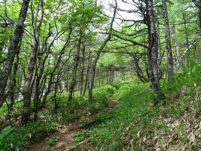 落葉松の道