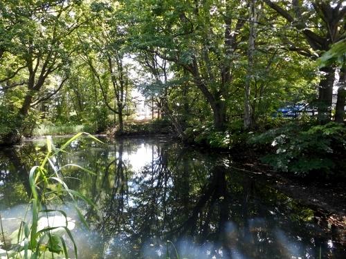 厚別区 池