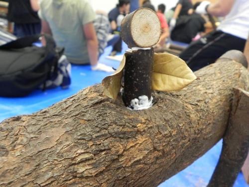 木の枝生物をつくろう!4
