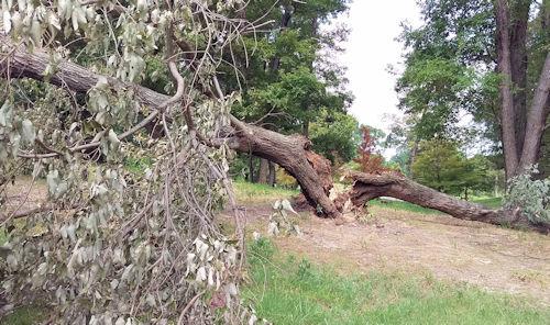 カリヨンの丘台風大木倒壊