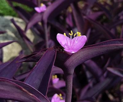 花の道紫御殿