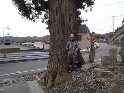 外周5,1mの大木