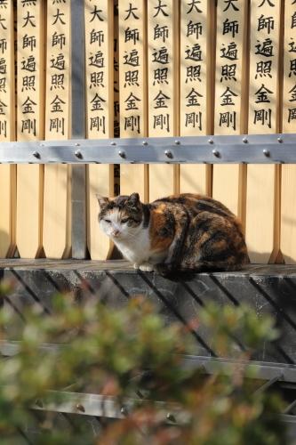 寺の三毛さん