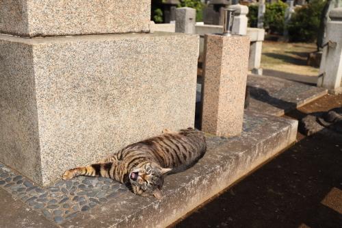 墓であくび