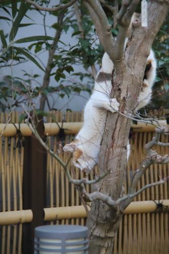 木から降りるくるりん