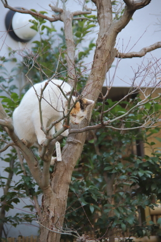 木登りくるりん