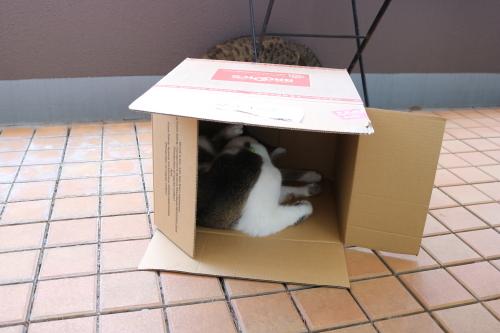 箱ふたり1