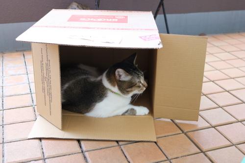 箱ふたり2