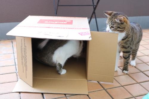 箱ふたり3
